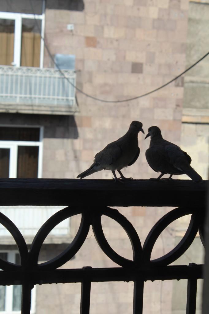 Լուսանկարը՝ Անի Ջիլավյանի