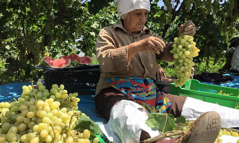 Արարատի մարզ, գ. Լուսառատ Ֆոտո՝ Աստղիկ Քեշիշյանի