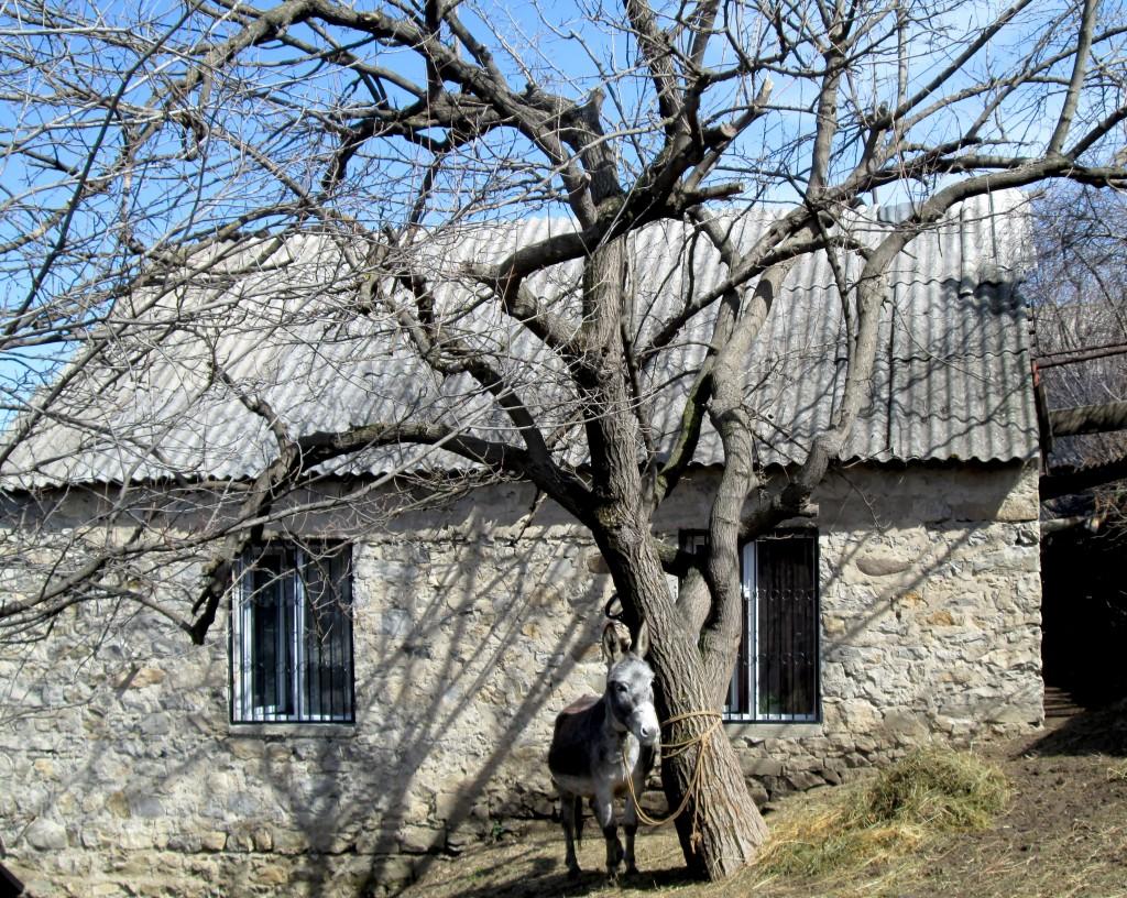 Լուսանկարը` Սոնա Հովակիմյանի